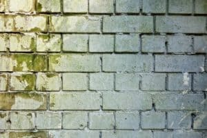 Best Exterior Paint to Prevent Mold